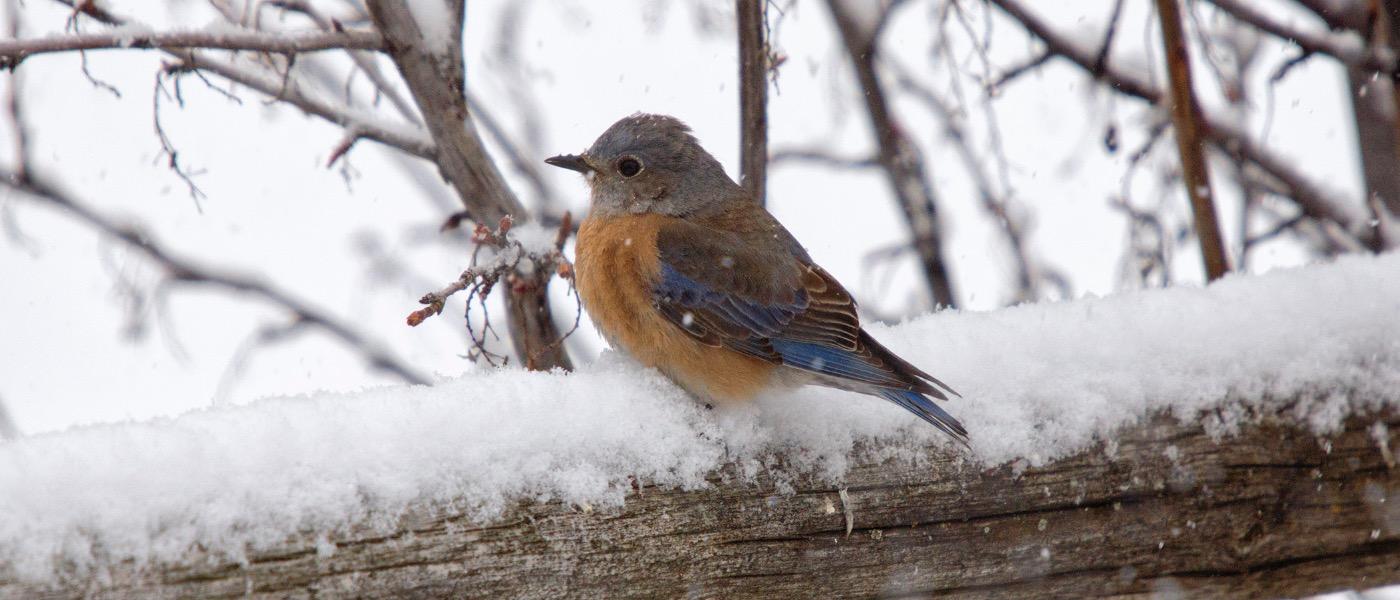 Bird Watching Birding