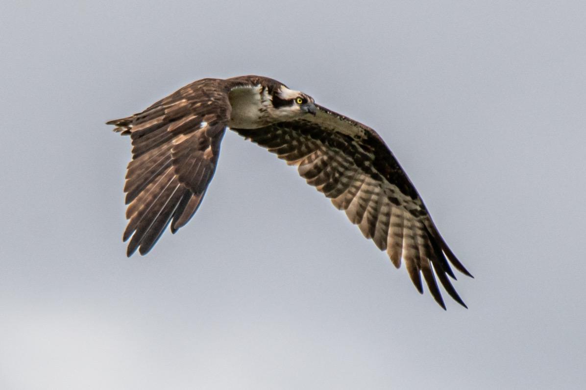 Wildlife birding