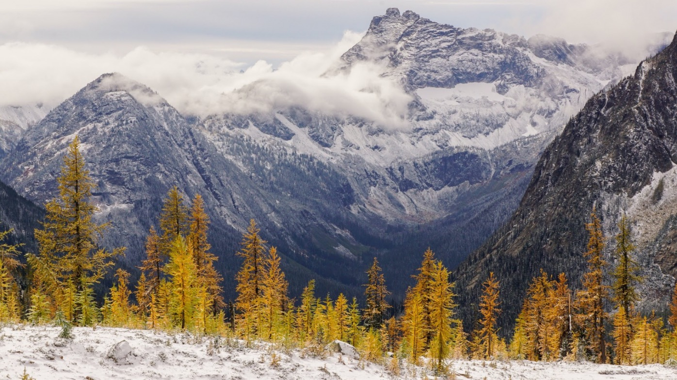 Western Larch snow