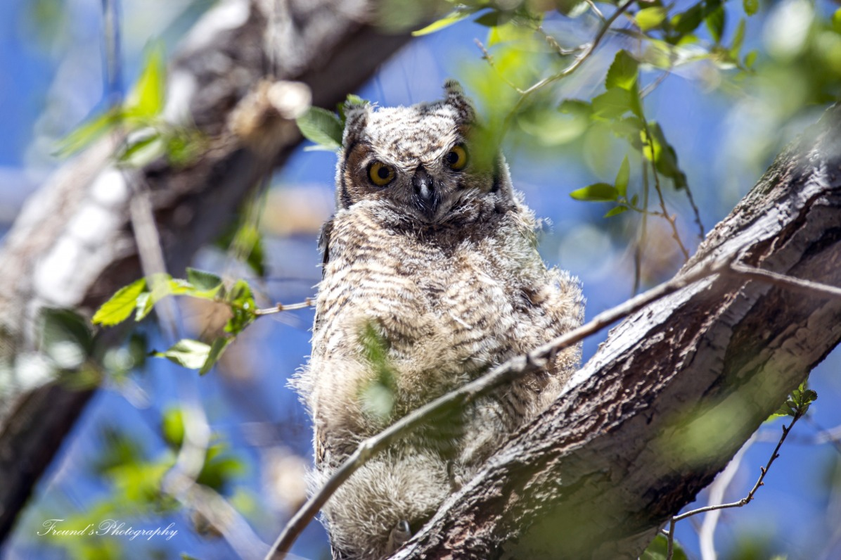 Fledgling on a branch
