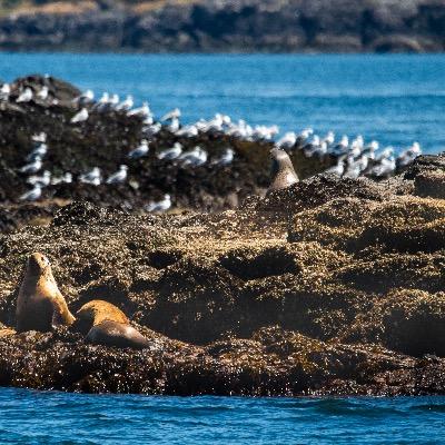 Sea life wildlife viewing Anacortes