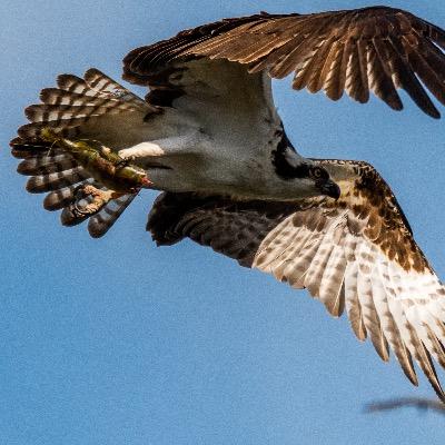 Birding bird watching