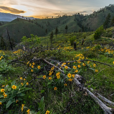 Professional photography wildflowers landscape