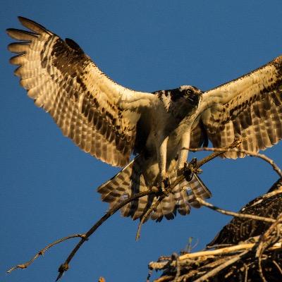 Professional photography birding bird watching wildlife
